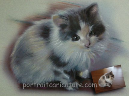 portrait chatton au pastel sur photo